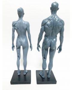 Monday Kids Human anatomy set skull brain skeleton dental camera make up model Gray for sale 1:6 30cm